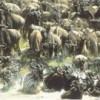 Hamerkop Safaris - Kenya's Best Tour Operators