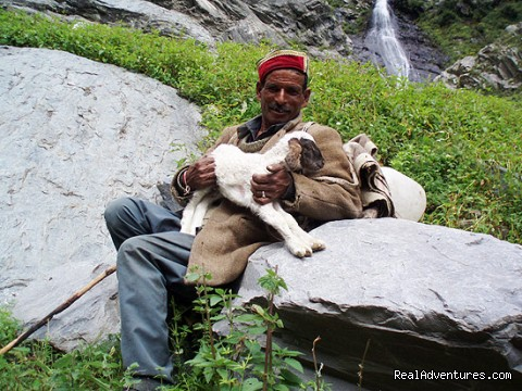 local Gaddi shepherd (#21 of 22) - Himalayan nature resort at Eagles Nest India