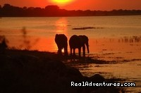 Tanzania holiday: Elephant across the river at selous