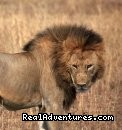 Diversity Wildlife and Birdlife Safaris
