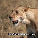 - Diversity Wildlife and Birdlife Safaris