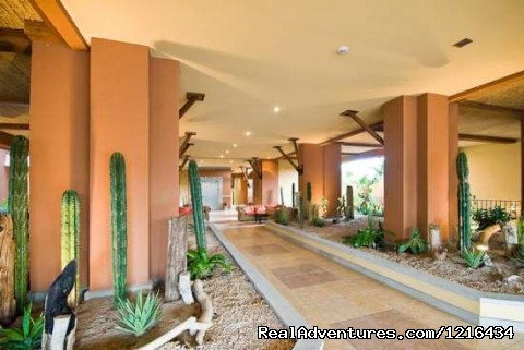 - Casa Oasis: elegant, stylish, modern, easy to cons