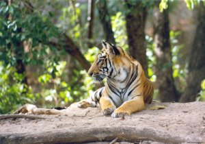 Wildlife Safaris & Adventure Sports In South Asia Tala, India Wildlife & Safari Tours
