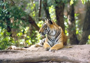 Wildlife Safaris & Adventure Sports In South Asia Wildlife & Safari Tours Tala, India