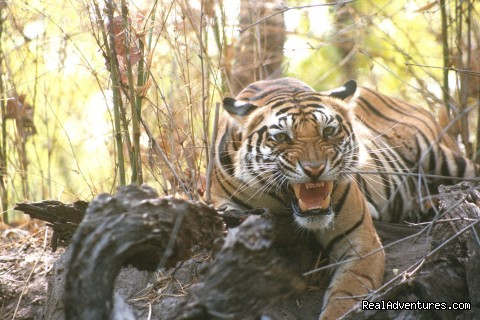 Don't Mess With Me - Wildlife Safaris & Adventure Sports In South Asia
