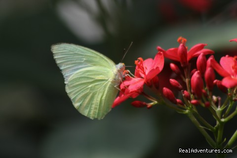 Butterflies - Wildlife Safaris & Adventure Sports In South Asia