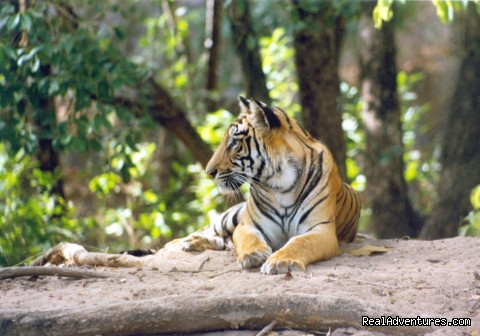 expeditions india wildlife safari tour detail