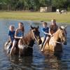 Horses love to swim