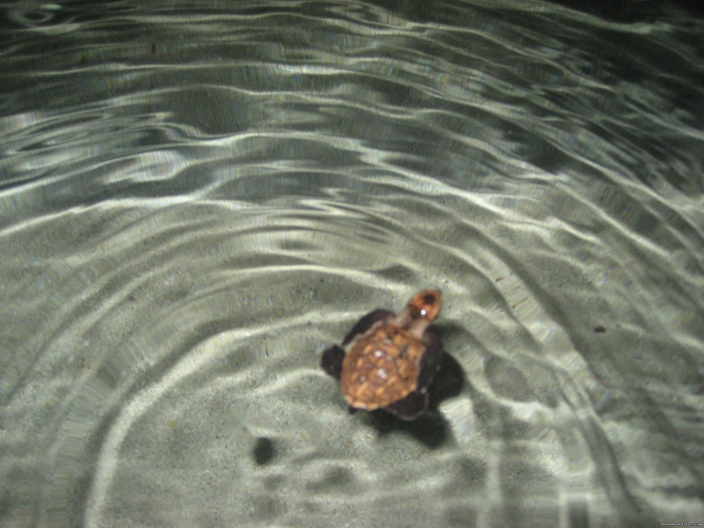 Hawksbill Turtle | Image #10/10 | Beach Bungalows in the Seychelles