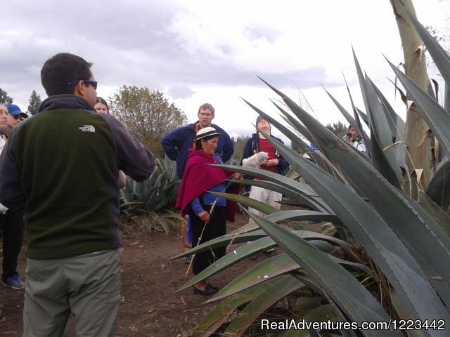 Acomodation (#4 of 7) - Spondylus & Green Coast Tour Ecuador