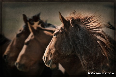 Spartan by Stephanie Adriana - Montana Horses at the Mantle Ranch