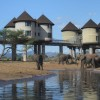 Three Days Tsavo East & Salt Lick Safari mombasa, Kenya Eco Tours