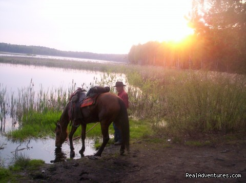 - Horsetrails in Poland-wild nature,beautiful horses