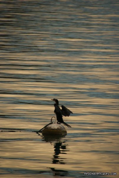 Cormorant, Lake Malawi | Image #14/23 | Malawian Style - Safari, Mountain, Lake Adventures