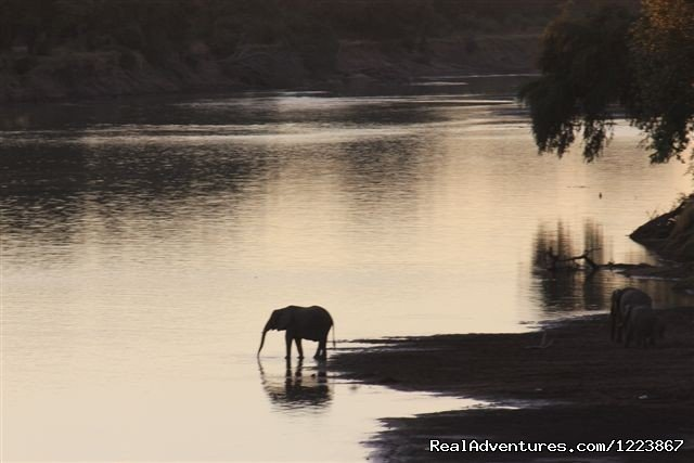 Elephants at dawn, South Luangwa | Image #15/23 | Malawian Style - Safari, Mountain, Lake Adventures