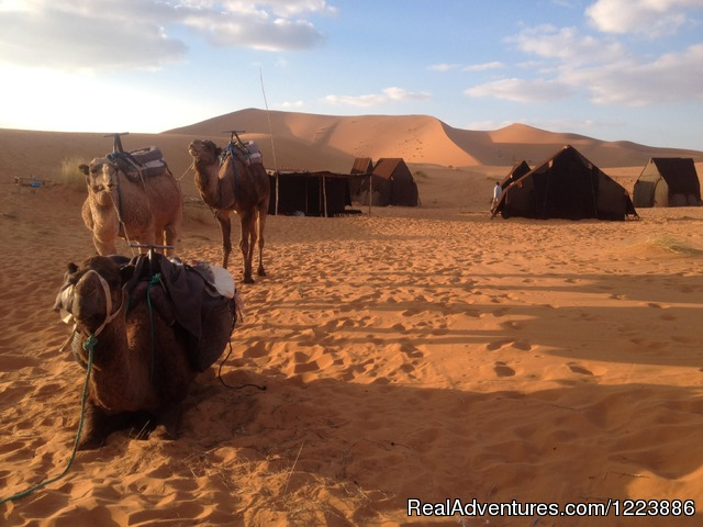 Camel Trek - Chez Youssef Lodge