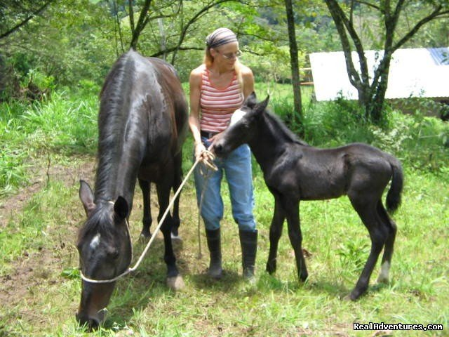 Beautiful baby | Image #2/11 | Adventure Trail Rides for the Experienced Equestri