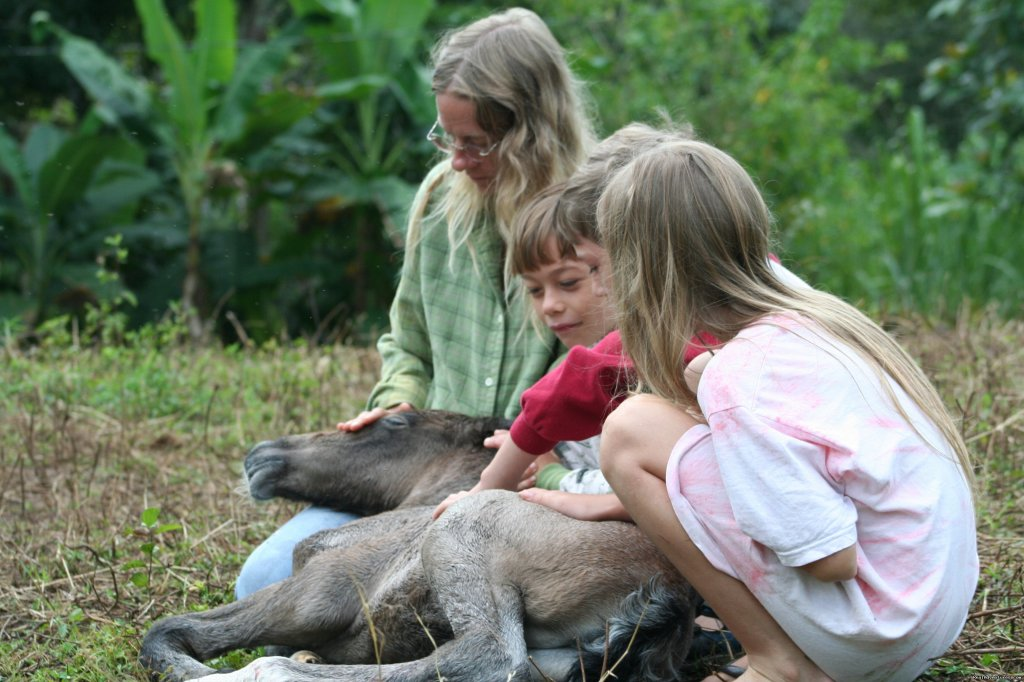 New born baby | Image #5/11 | Adventure Trail Rides for the Experienced Equestri