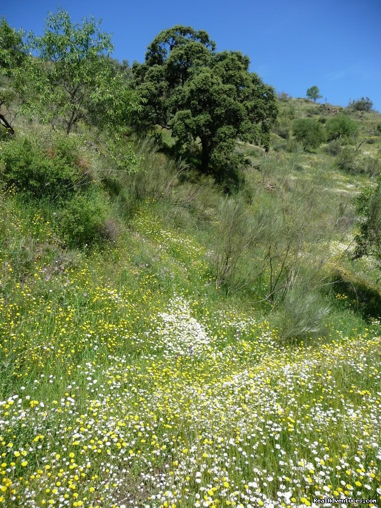 Spring in Andalucia