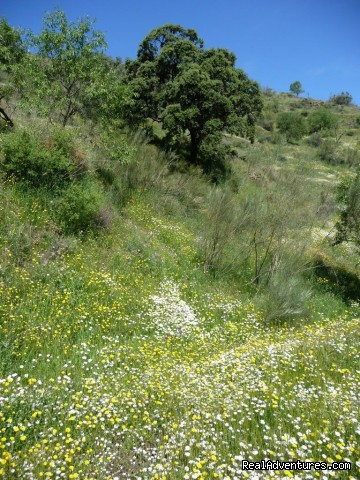 Spring in Andalucia - Hiking Holidays in Spain's most beautiful region