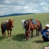 Happy Mongolia tours Eco Tours Mongolia