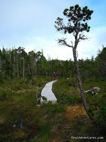 Boardwalk through Upland Bog - Top 10 Hikes in the World-BC's West Coast Trail