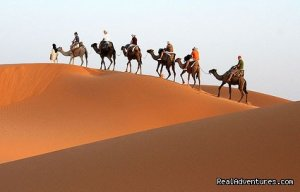 Real Camel Trekking & walking holidays in morocco Marrakech , Morocco Sight-Seeing Tours