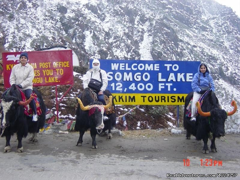tourist having a blast ridind a yak. | Image #4/6 | Your Travel Companion For Sikkim, Darjeeling.