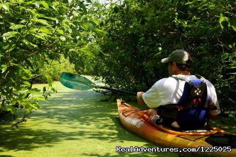 Kayaking in Southern Illinois (#5 of 5) - Shawnee Adventure Guides