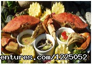 Dungeness Crab - Amazing Alaska Destination