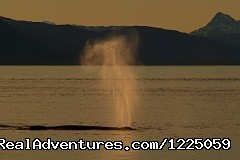 Image #5 of 9 - Spirit Walker Expeditions of Alaska
