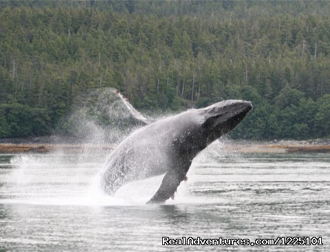 Weather Permitting Alaska LLC Juneau, Alaska Whale Watching