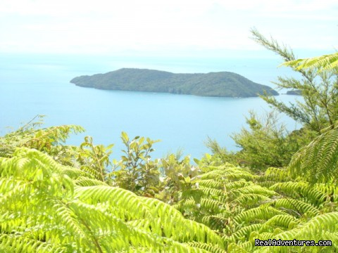 Queen Charlotte Track Visit a bird sanctuary island