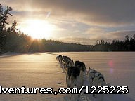 Dog sled trips - Bearskin Lodge