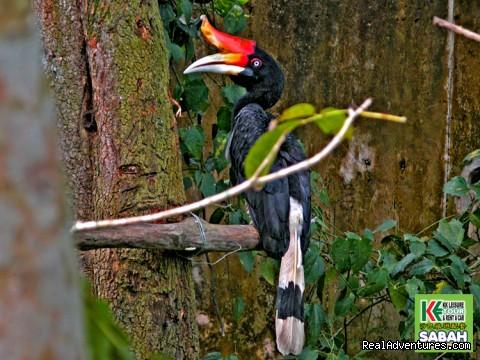 Kota Kinabalu City Tour - Lok Kawi Zoo (#6 of 19) - 3D/2N Kota Kinabalu City Tour/Zoo/Kinabalu Park