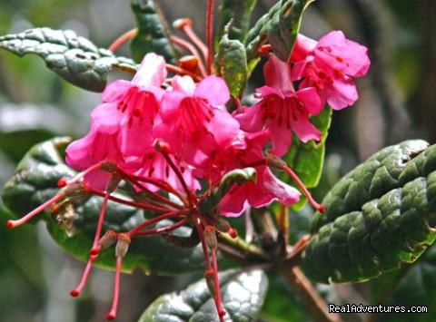 Kinabalu Park - 2D/1N Kinabalu Park/Mesilau/Sabah tea