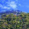 2D/1N Kinabalu Park/Mesilau/Sabah tea