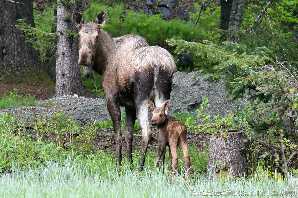 Mama and baby | Image #3/11 | Chilkat River Adventures