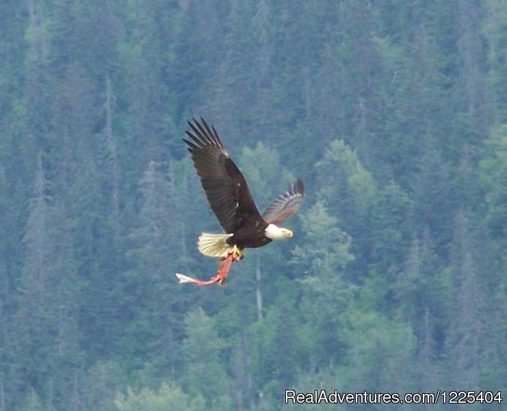 Eagle with fish | Image #6/11 | Chilkat River Adventures