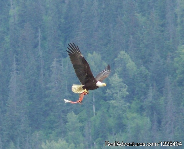 Eagle with fish - Chilkat River Adventures