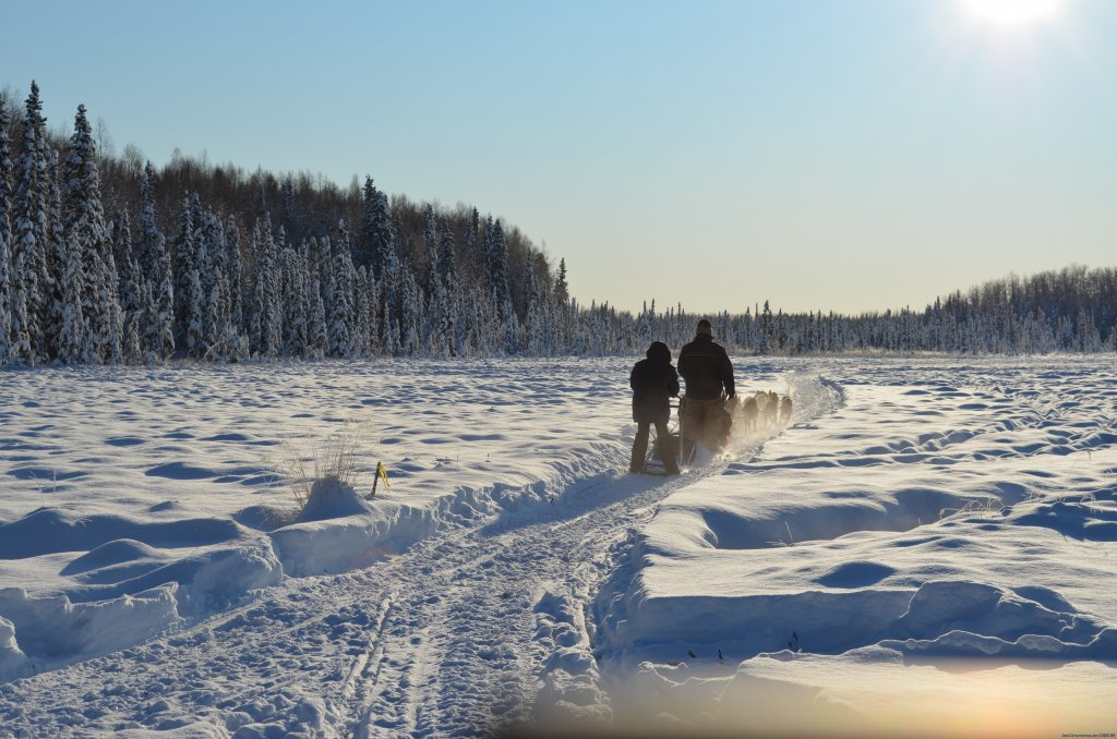 Alaska Dog Sledding | Image #3/17 | Salmon Berry Travel & Tours