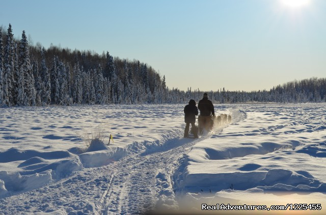 Alaska Dog Sledding - Salmon Berry Travel & Tours