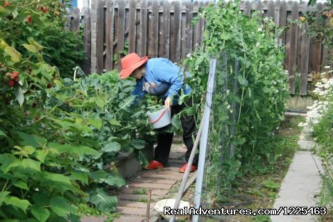Carol Ross in the Garden (#12 of 12) - Big Bear Bed & Breakfast
