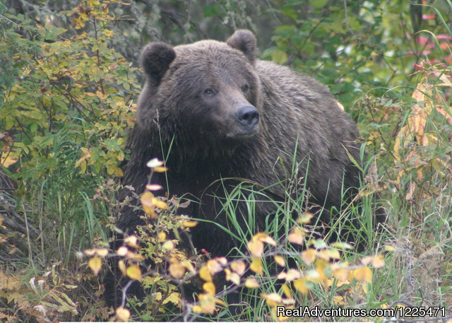 Private Brown Bear Viewing at our own Camp - Alaska's Destination for Adventure