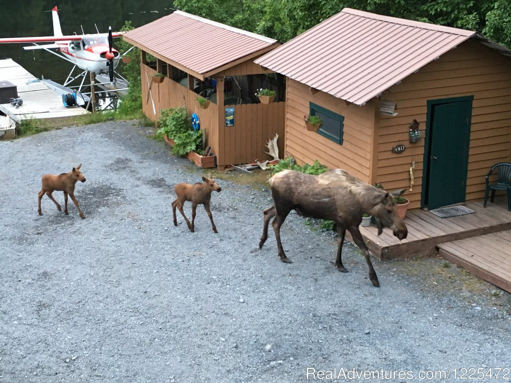 Bear Lake Lodgings B&B, Wildlife visit | Image #12/17 | Bear Lake Lodgings B&B