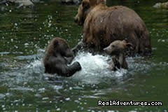 Brown bear and cubs (#4 of 8) - Alaska River Adventures