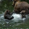 Alaska River Adventures Brown bear and cubs