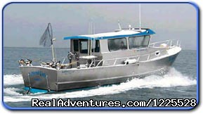 Homer Ocean Charters - Experience Alaska with Homer Ocean Charters