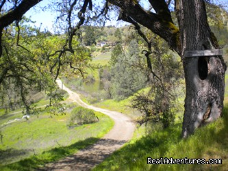 Driveway at Hillcrest Country Inn - Napa Valley's Destination Getaway at Hillcrest B&B