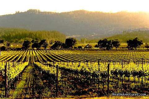 Napa Valley Vineyards from Hillcrest - Napa Valley's Destination Getaway at Hillcrest B&B